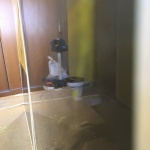 Muestras de Estuco Negro - Amarillo (4)